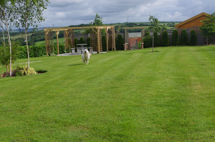 Country View Boarding Kennels and Grooming Parlour is homed in a beautiful setting