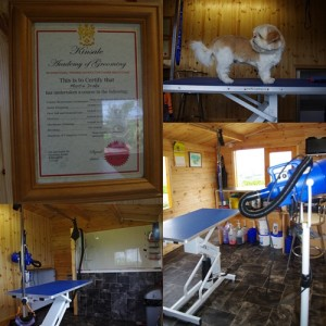 Qualified staff, the best products and the most modren equipment ensure that your dog will enjoy his time at Country View Kennels and Grooming Parlour